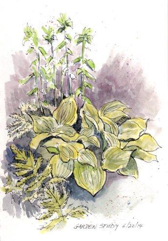 Garden Study 6/20/14